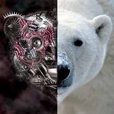 Whitebear Lost In Vibrations Dave Sweeten Remix